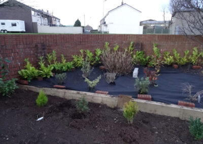 egremont retaining wall and new plants
